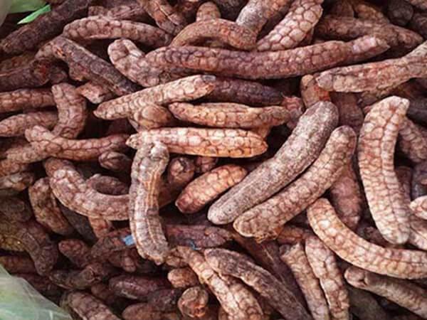 Giá bán chuối hột rừng khô bao nhiêu tiền