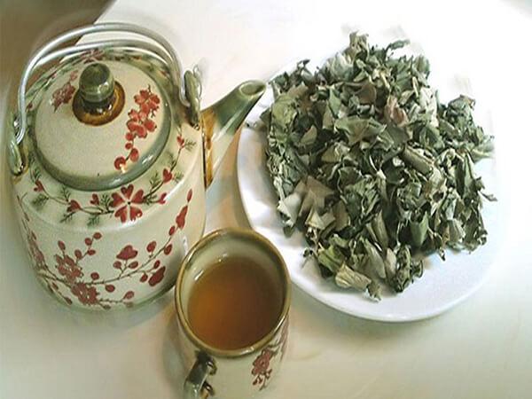 Cách pha trà lá vối
